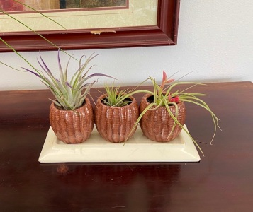 Yesterday, we went to buy more plants to decorate the house, then to buy pots to put them in.