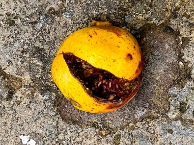 and a slit-open pomegranate from my own tree forms a happy face, welcoming me home