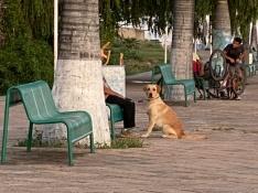 An this dog saw me!