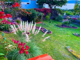 Pampas Grass and Bougainvillea